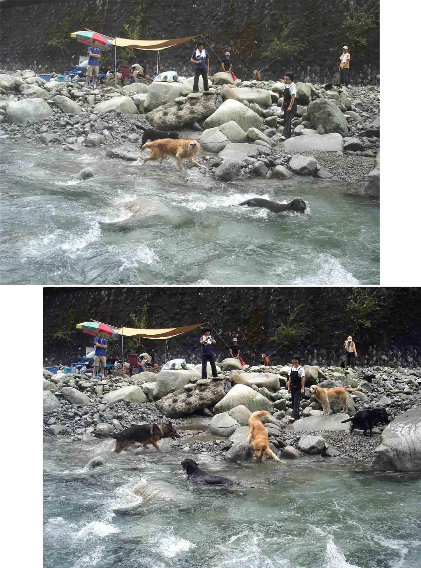 ⑯対岸からキャンプ場と犬たち(二連)