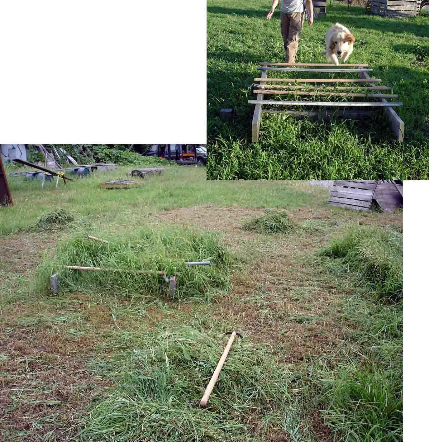 草刈中の様子(7月26日との比較)
