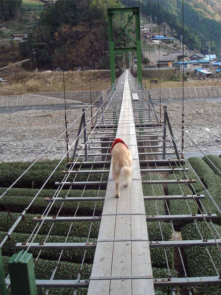 上渡の吊橋①
