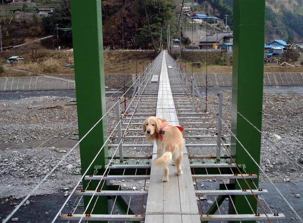 上渡の吊橋② 行くの?