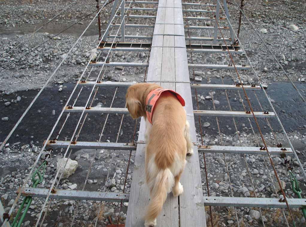 上渡の吊橋③ 下見えてるし