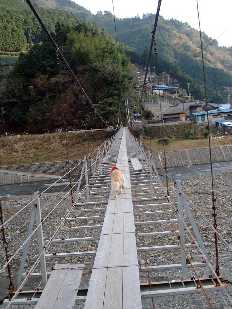上渡の吊橋④ 不安だな~