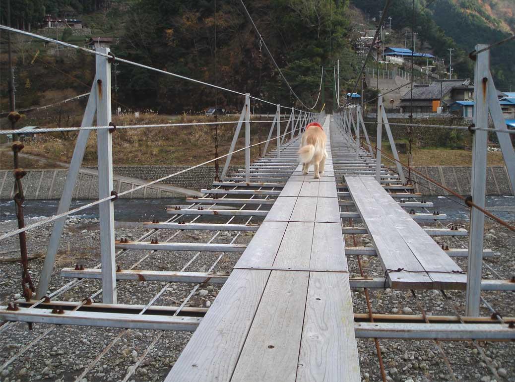 上渡の吊橋⑥ 揺らさないでよ