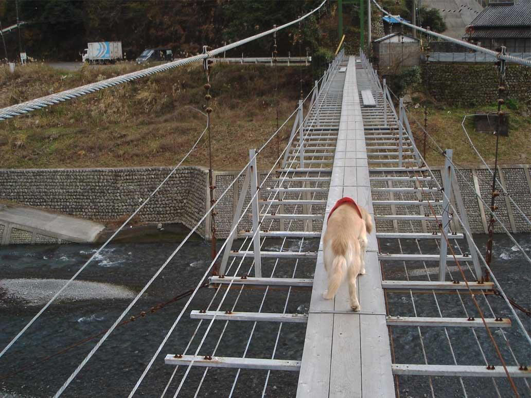 上渡の吊橋⑦ 川の上だ