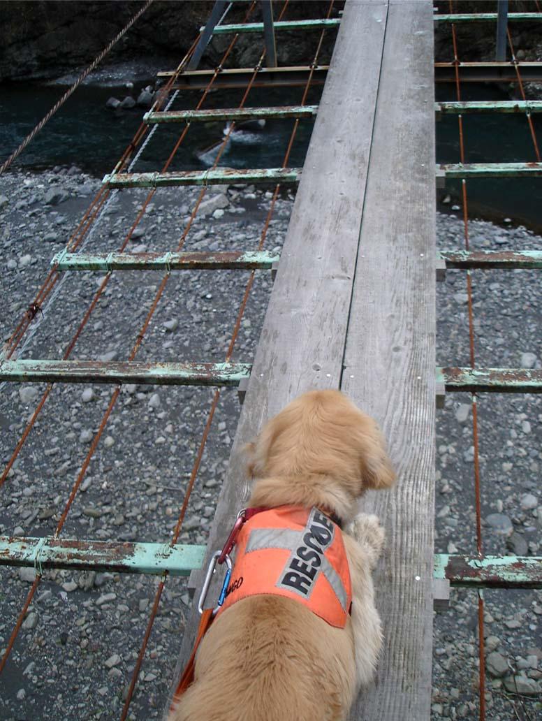 上渡の吊橋⑤ たどたどしいです