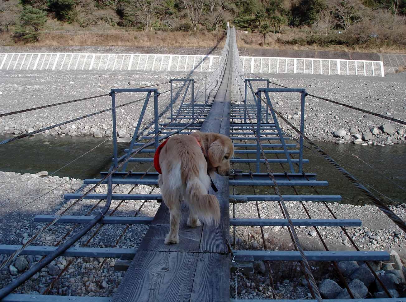 NHの吊橋② またですか?