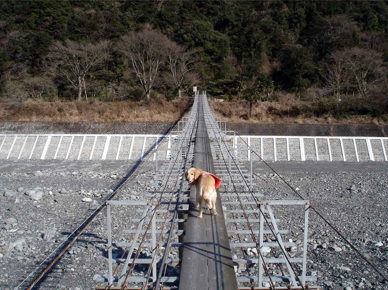 NHの吊橋④