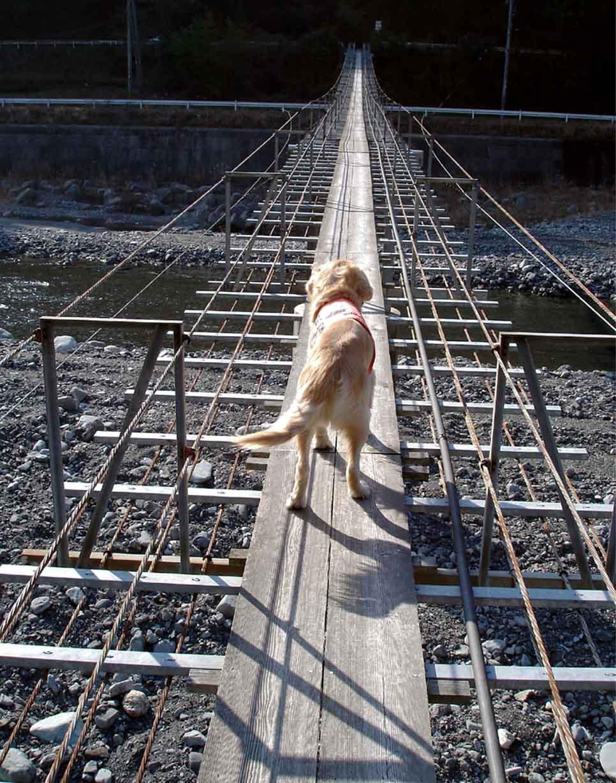 NHの吊橋⑤