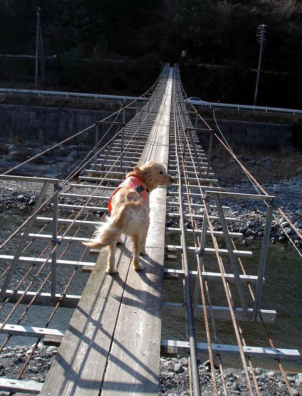 NHの吊橋⑦