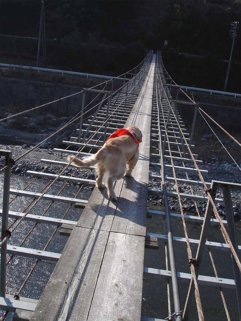 NHの吊橋⑧