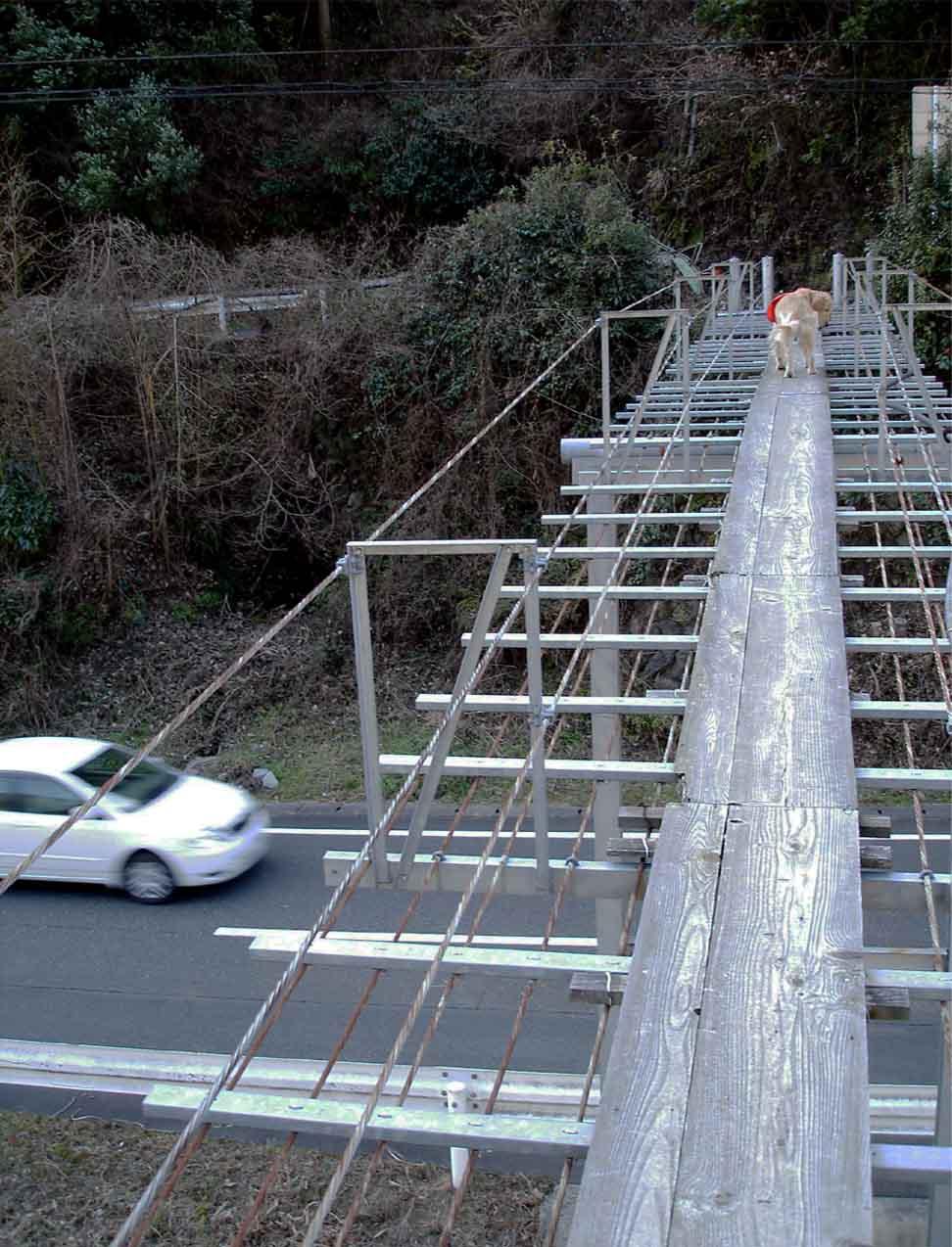 NHの吊橋⑨