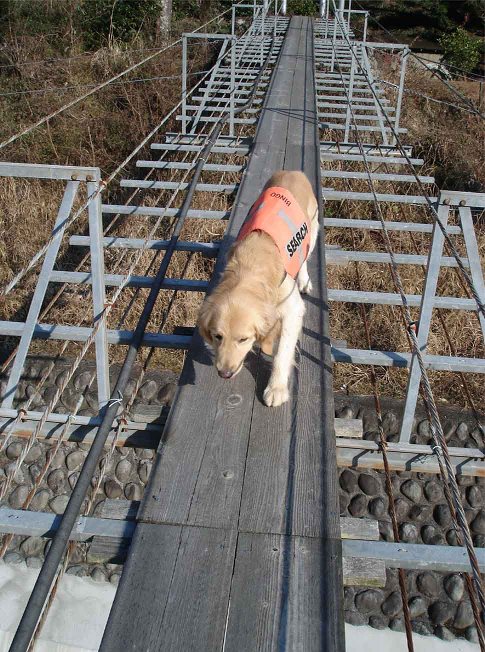 NHの吊橋(渡り返す)