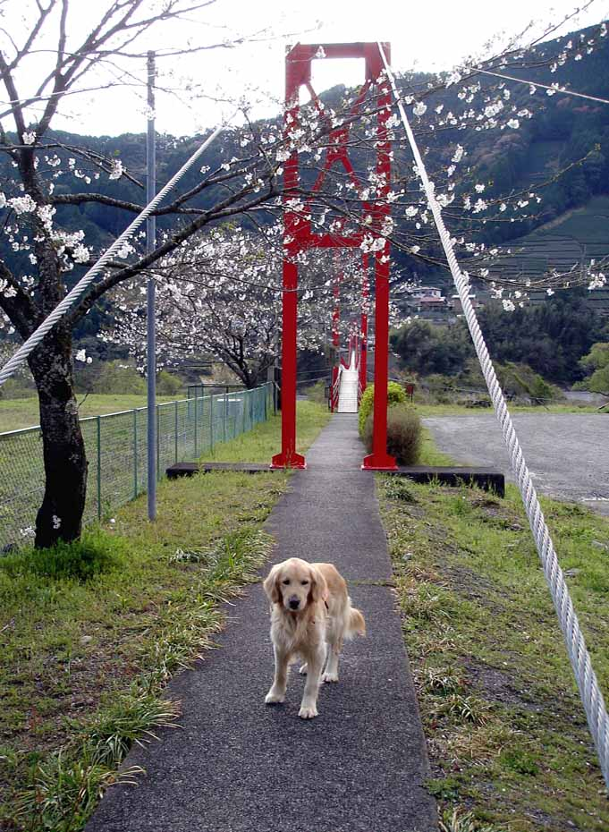 相淵の吊橋①