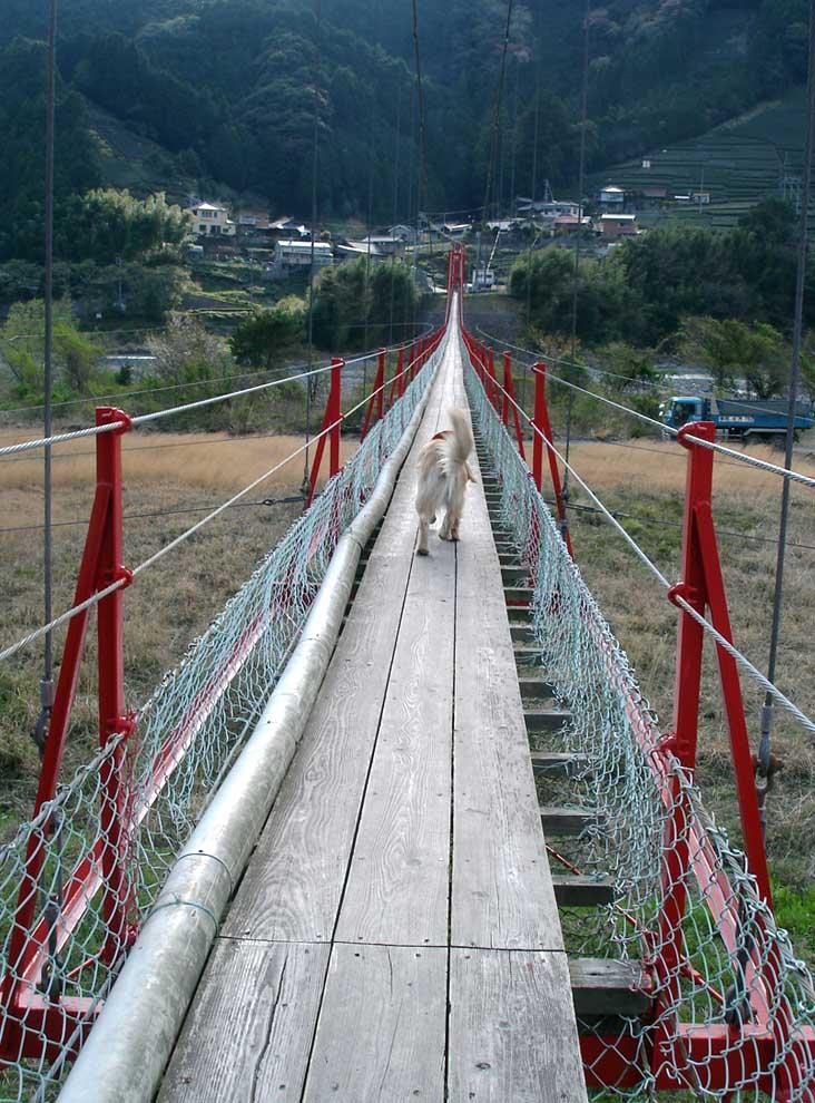 相淵の吊橋②