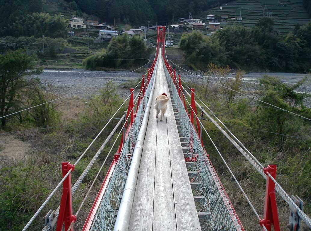 相淵の吊橋③