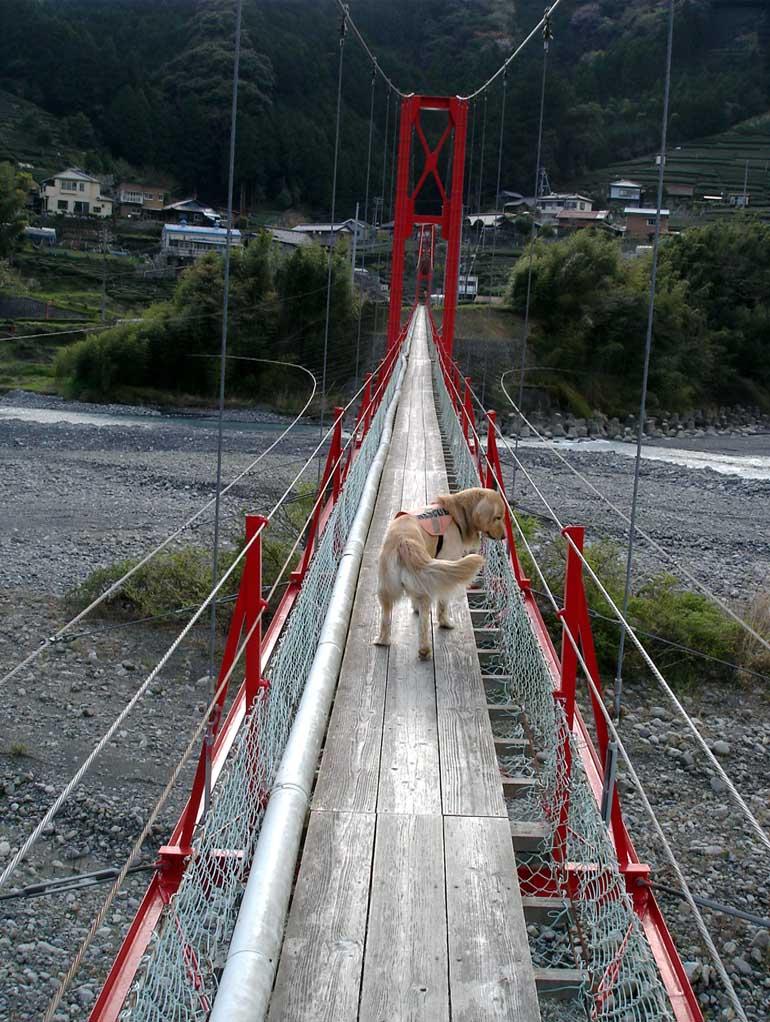 相淵の吊橋④