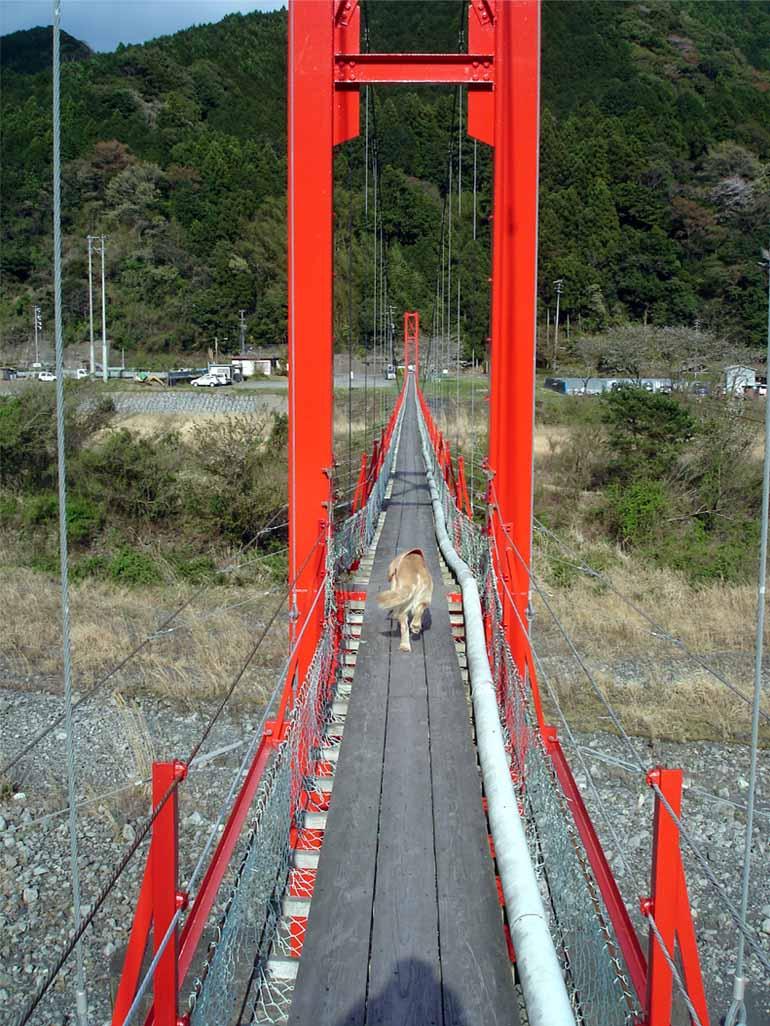 相淵の吊橋⑧