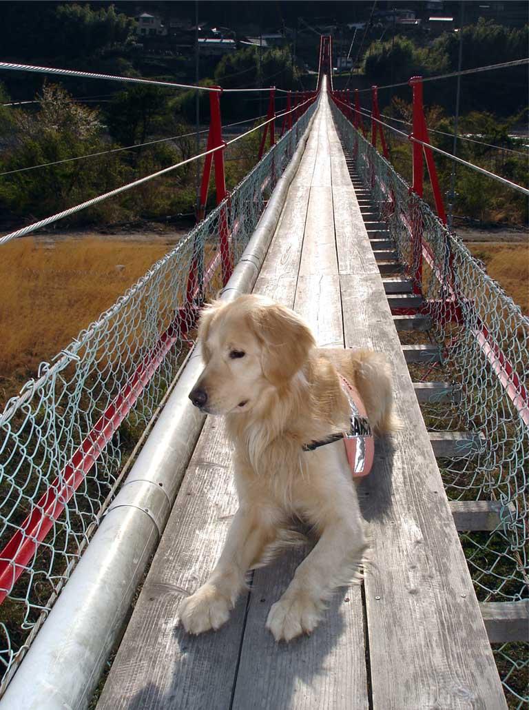 相淵の吊橋⑩