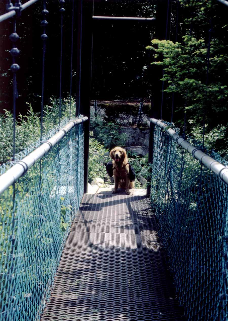 鉄網の吊橋①