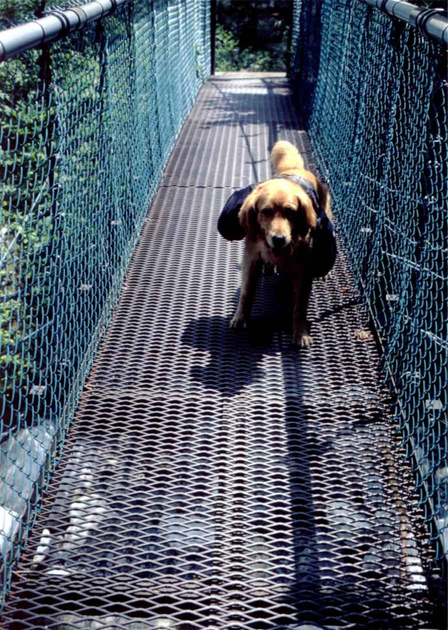 鉄網の吊橋②