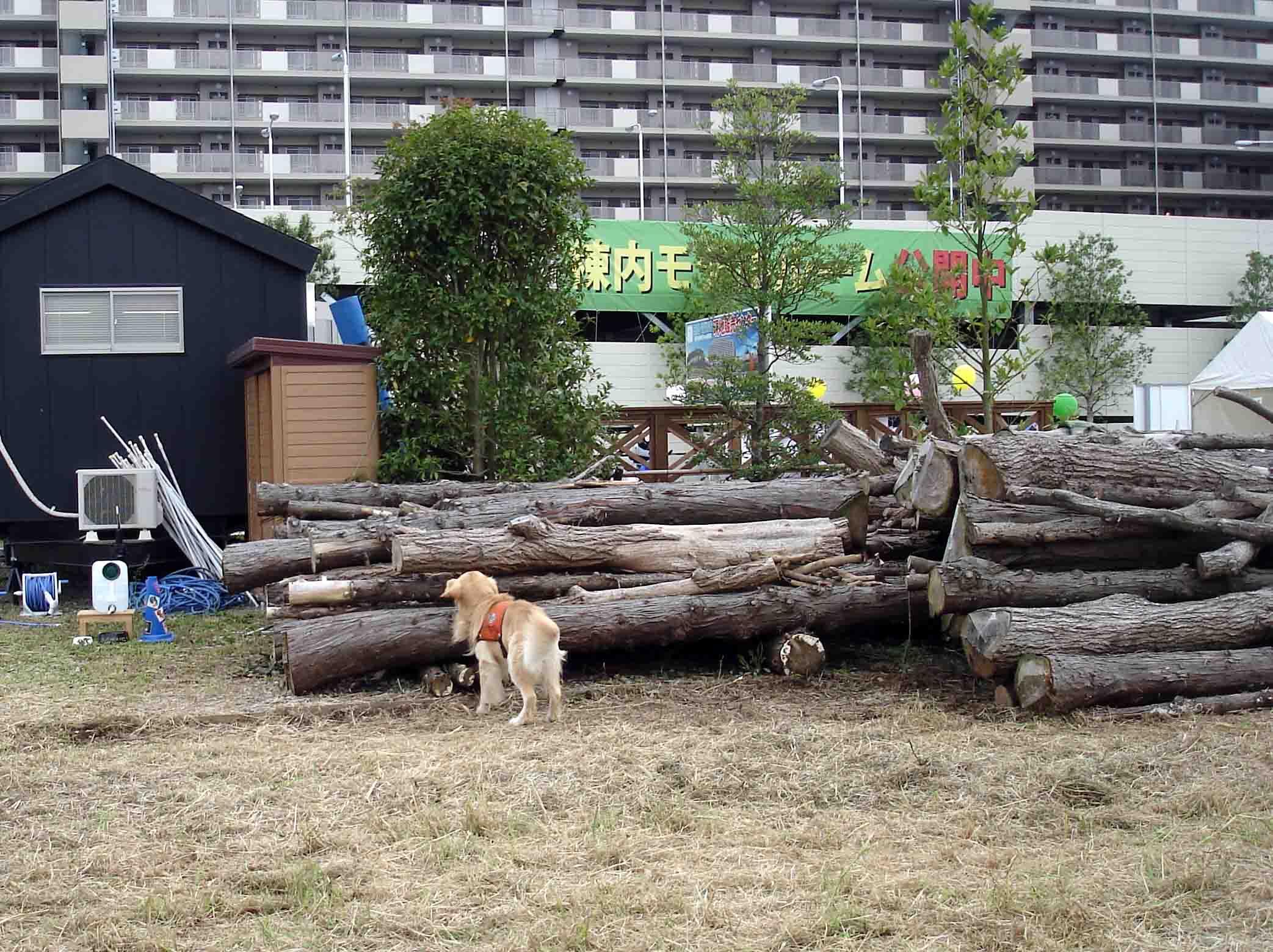 会場脇の切積み樹木を利用①