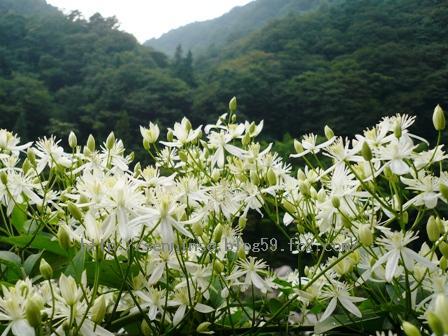 仙人草の花0902