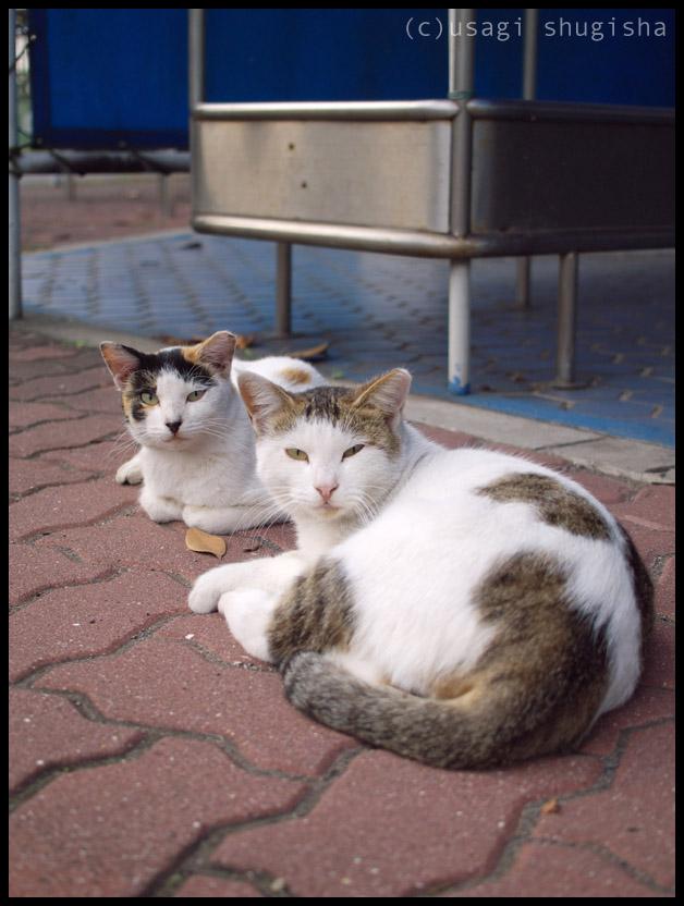 美猫SPP1012178