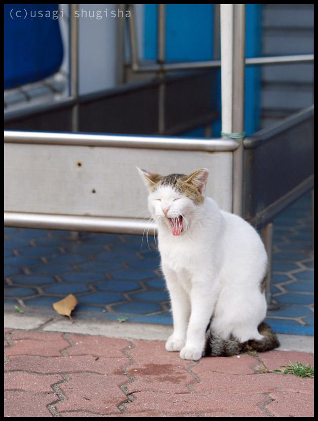 美猫SPPA186990