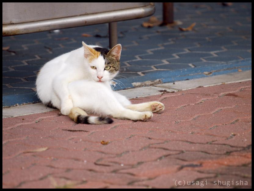 美猫SPPA186970
