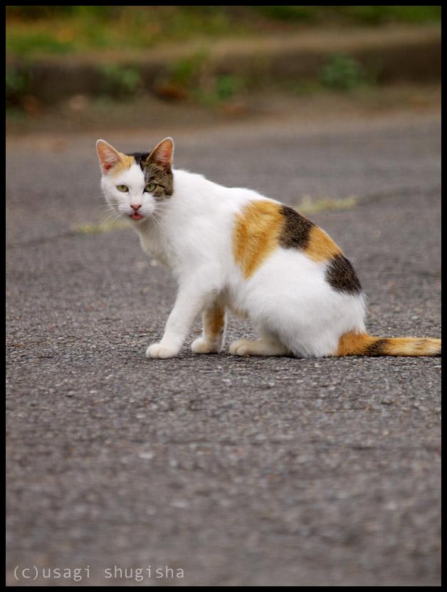 美猫SPPA186981