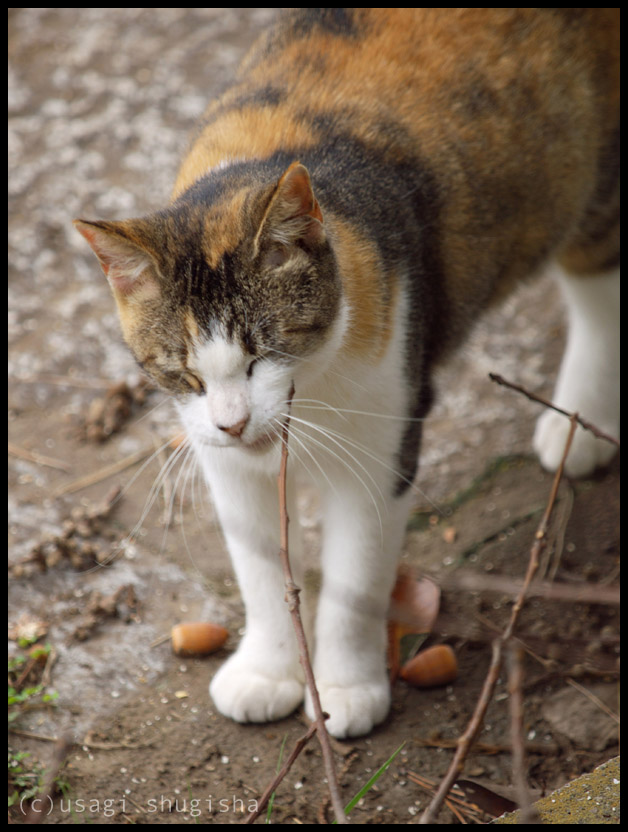 美猫SPPA186942