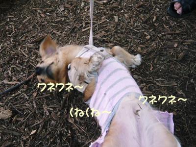 003_20080310151816.jpg