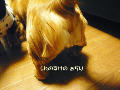 006_20080313185033.jpg