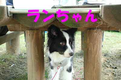 DSC_0004_20080722161418.jpg