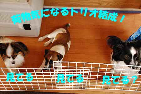 DSC_0010_20080717152411.jpg