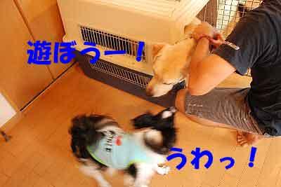 DSC_0031_20080709114033.jpg
