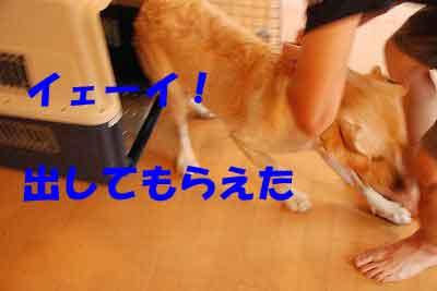 DSC_0033_20080709114037.jpg