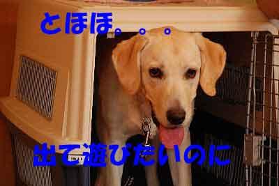 DSC_0055_20080709114122.jpg