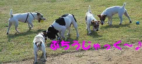 DSC_0059_20080804122117.jpg