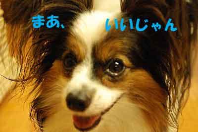 DSC_0075_20080705212430.jpg