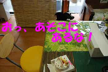 DSC_0104_20080609123750.jpg