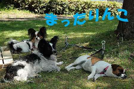 DSC_0110_20080722161523.jpg