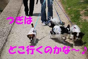 DSC_0114_20080605124715.jpg