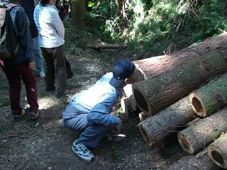 木のにおい