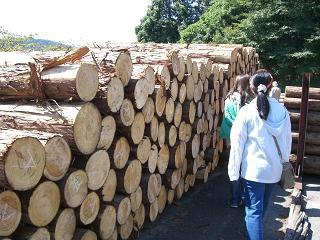 木材市場②