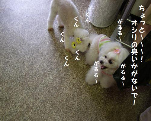 P6150032.jpg