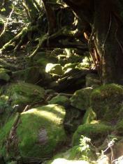 屋久島2008 049