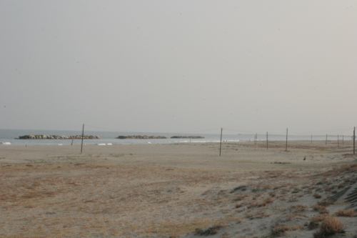 090411深沼2