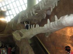 恐竜の化石?