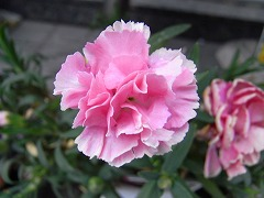 mini_R0015329.jpg